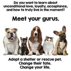 Meet your gurus...