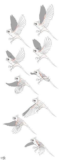 bird wings: