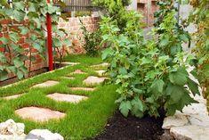 Ahol a szőlő beérik, ott a kivivel is érdemes megpróbálkozni Stepping Stones, Gardening, Stock Photos, Outdoor Decor, Green, Home Decor, Homemade Home Decor, Garten, Lawn And Garden