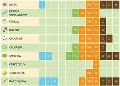 Kalendarz sezonowości warzyw i owoców
