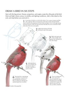 Draw a bird in 6 steps (http://www.audubonmagazine.org/articles/living/how-draw-bird#.UJFpmP_w1lg.pinterest)