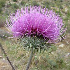 103 Best Desert Flowers Images Desert Flowers Flower Names Names