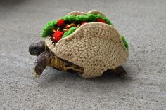 6 Times Taco Tuesday Touched Greatness Through Knit & Crochet - Turtle Taco by Katie Bradley Cute Tortoise, Tortoise Habitat, Turtle Habitat, Baby Tortoise, Tortoise Turtle, Cute Funny Animals, Cute Baby Animals, Animals And Pets, Pet Turtle