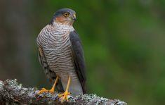 Free Pictures, Free Images, Hawk Bird, Fishing World, Green Animals, Green Nature, Predator, Vector Graphics, Wildlife