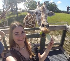 O Serengeti Safari é um tour privado do parque Busch Gardens e te deixa pertinho de animais do safari africano, como antílopes e girafas. E você também pode alimentar alguns deles. Orlando, Busch Gardens Tampa Bay, Animals, Travel Guide, Giraffes, Loom Animals, Parks, Animales, Animaux