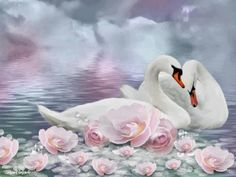 beautiful swan art