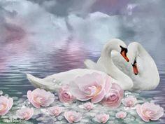 beautiful swan art