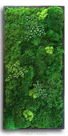 5858 Real Preserved Moss Wall Art Green Wall Collage No Sticks. No care green wall art. Real preserved moss and ferns