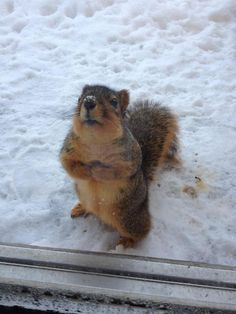 """so cute!  """"It's cold out here--pweeve let me come inside wif you""""!!!   ;-)"""