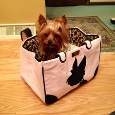 Gia in her New Yorkie Bag