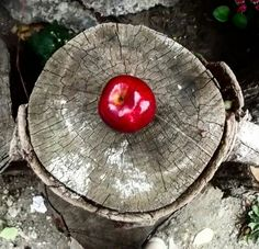 There was once a wizard who lives in the woods. İt makes magic with apples and leaves on the trees. Magic spells to slow the earths rotation. For those who eat the Apple world turns slower and ıf they were no longer has the time to understand the value.