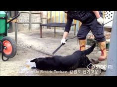 STILL 47.905 SIGNATURES NEEDED!!!!!!!!!!!!!!!!!!  Gangwondo - South Korean Dog Meat Industry 강원도 개도살장