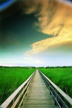 Marsh boardwalk in Manitoba | Flickr - Photo Sharing!
