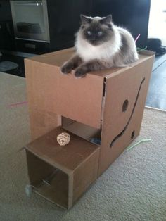 I love to make these and leave them set up until they lose interest, then just break the boxes down and recycle them...then when another box comes into the house the cats freak out! Any size box works!!