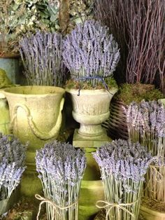 Hand-made Dried French Lavender Topiaries I hand-crafter stone garden urns