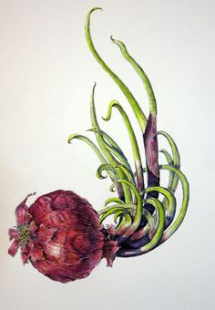 Botanical Illustration: Watercolor pencils - something in between drawing and painting