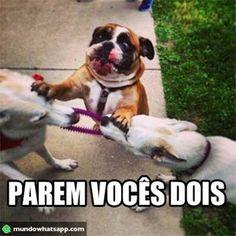 Treta no grupo não é legal. Bora apartar! Veja o post completo: http://boo-box.link/27AQN   #whatsapp   #zzz   #humor   #dogs   #briga   #grupo
