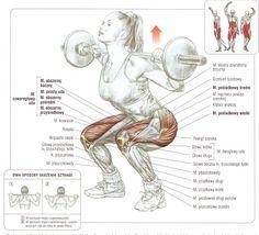Tygryskowym okiem - ćwiczenia siłowe, domowe programy treningowe, zdrowy styl życia: Przysiad - obalamy mity, rozwiewamy wątpliwości