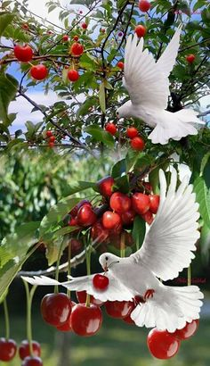 What a beautiful picture! Gorgeous birds in a perfect moment Beautiful Nature Pictures, Beautiful Flowers Wallpapers, Most Beautiful Birds, Beautiful Nature Wallpaper, Pretty Birds, Beautiful Landscapes, Animals Beautiful, Dove Images, White Doves