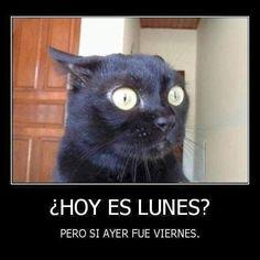 #atrabajar #alevantarse #madrugar #madrugon  #lunes  #buenosdias  Buenos días by mamenmm69