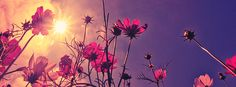 Nice Flower At Sunrise Facebook Cover Photo   JUSTBESTCOVERS