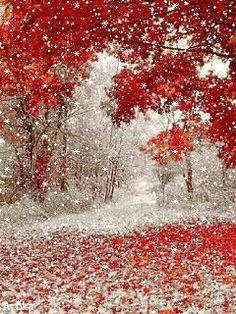 Beautiful Winter Pictures, Winter Images, Winter Photos, Christmas Scenery, Winter Scenery, Christmas Pictures, Flower Phone Wallpaper, Fall Wallpaper, Christmas Wallpaper