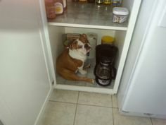 Where we keep our bulldogs stored.