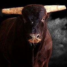 Rodeo on Pinterest | Bull Riding, Bull Riders and Lane Frost