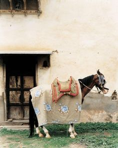 148 Best Horse, riding, fashion images | Equestrian style