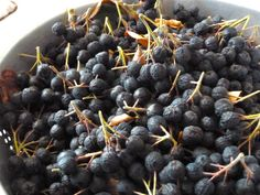 Harvesting and freezing #aronia berries. Very good advice.