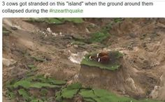 New Zealand Earthquake Earthquake Damage, Earthquake And Tsunami, New Zealand Earthquake, 500 Miles, Canterbury, Geology, The Rock, Eve, Rolls