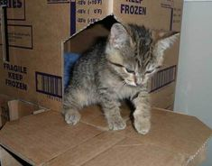 Build A Two Story Cardboard Box Castle/hut For Your Cat! Everyone Knows You