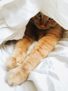 He loves new bedding Peter Pan, Good Morning, Bedding, Kitten, Cats, Animals, Buen Dia, Cute Kittens, Kitty