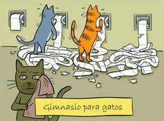 Gatos na academia.