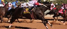 Too Flash For You(2011)First Moonflash- Rare Pie By Rare Form. 4x4x5 To Dash For Cash. 17 Starts 7 Wins 3 Seconds. $999,550. Shown Winning All American Derby(G1) At Ruidoso Downs On August 31, 2014. Gelding.