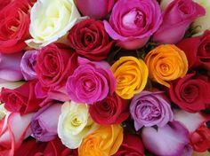 Cómo conservar los pétalos de rosa frescos - http://www.jardineriaon.com/como-conservar-los-petalos-de-rosa-frescos.html