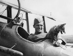 """During the Great War, the RAF's squadron mascot was a fox found in France. According to the pilots, the fox """"was fond of flying""""."""