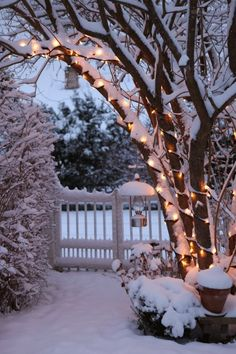 christmas lights in your garden - best ideas