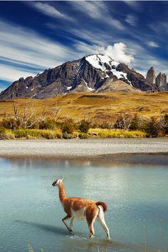 wildlifeexperience:  Visit us to experience the wildlife: Wildlife Experience