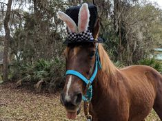 Clearance: White Rabbit Top Hat for Horses - Soft Equine Easter Hat - Fun Black Top Hat for Full-Sized Equines Driving Cap, Velour Tops, Horse Costumes, Names Of Artists, Black Top Hat, Rabbit Ears, Hobbit, Pony, Horses