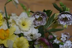 Daffodils and Hellebores - winter staples. Creamy yellow, pink spotted petticoats.
