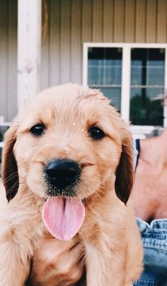 This special puppy golden retriever will brighten your day. Dogs are fascinating companions. Cute Funny Animals, Cute Baby Animals, Funny Dogs, Animals And Pets, Perros Golden Retriever, Golden Retrievers, Retriever Puppies, Cute Dogs And Puppies, Doggies