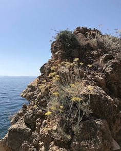 "290 Likes, 9 Comments - Twitter @L_Giubbilei (@lucianogiubbileigardens) on Instagram: ""helichrysum italicum #lucianogiubbilei #landscape and #garden #design #tuscany #seaside #planting"""