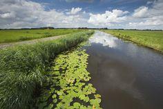 Beeldbank RWS (https://beeldbank.rws.nl/RuimtevoordeRivier/MediaObject/Details/Bij_Kampen_wordt_een_hoogwatergeul_gegraven__project_IJsseldelta_Zuid_404377)