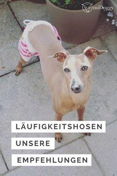Hunde in der Läufigkeit: wir haben Schutzhöschen getestet und stellen Euch unsere Empfehlungen vor.