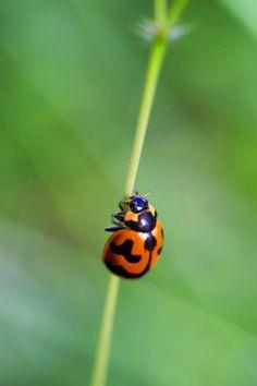Ladybug by NC3X