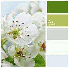 color palettes / color inspiration.