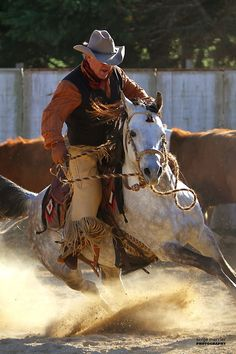 Team penning with an arabian horse   Flickr - Photo Sharing!