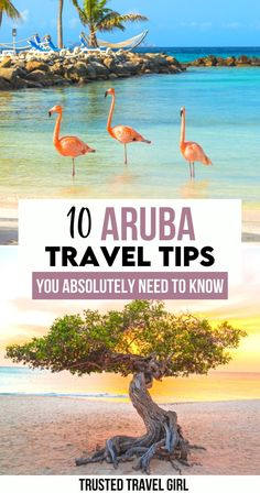 10 Aruba Travel Tips You Absolutely Need to Know. These are the 10 things you should know before traveling to Aruba. The ultimate Aruba Travel Guide. When to go, what to bring, how to get around and more! All the information you need to plan your trip to Aruba. | Traveling to Aruba | Aruba travel tips | Aruba trip planning | Aruba tips | Aruba travel guide | #aruba #arubatravel Central America, North America, Aruba Aruba, Visit Aruba, Caribbean Vacations, Worldwide Travel, Travel Aesthetic, Vacation Trips, Beautiful Beaches