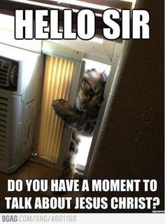 Jehovas Kittens